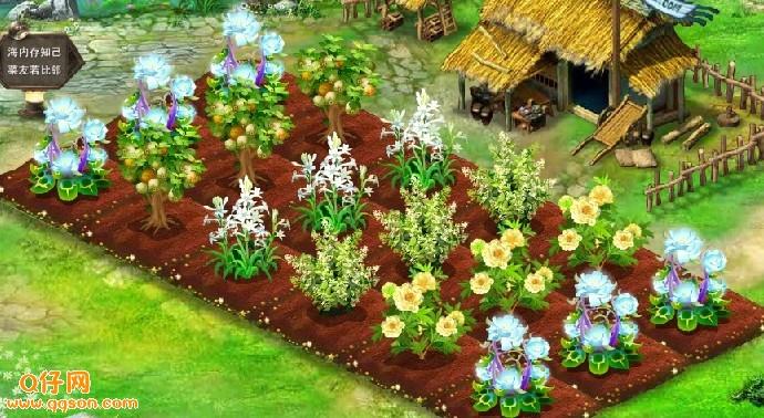 qq农场家园挚爱花、黄花魁种子经验属性及成长图