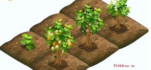 qq农场无花果种子经验属性成长时间及无花果生长图